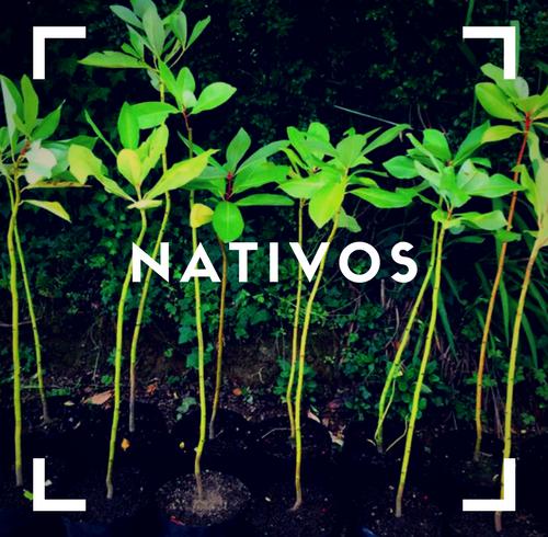 nativos(1)