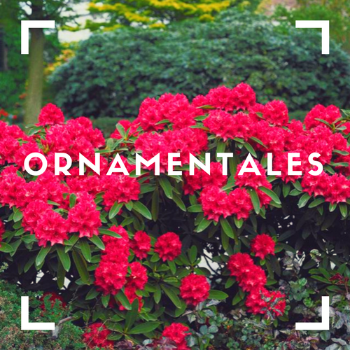 ornamentales