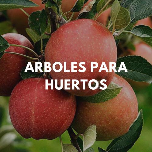 vivero_puerto_varas_rincon_verde